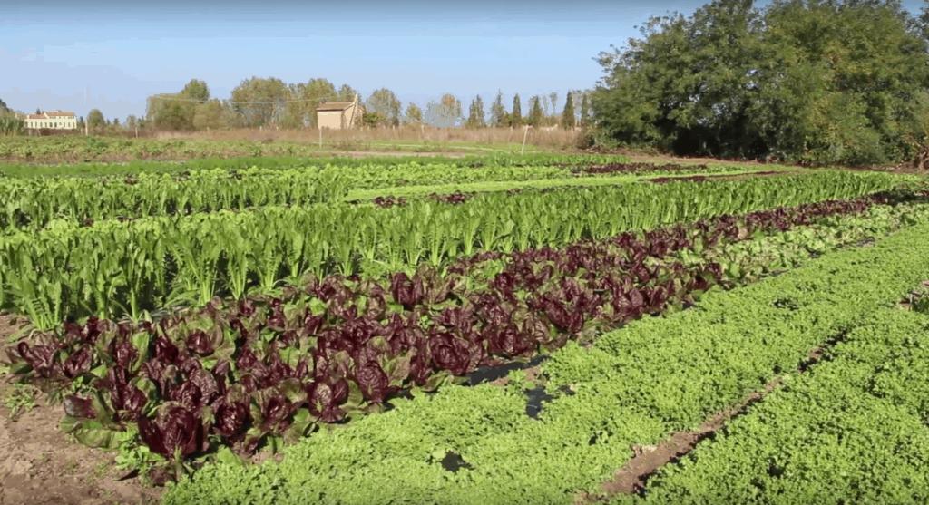 Cosa fare a Sant'Erasmo, l'orto di Venezia, credit to I&S FARM