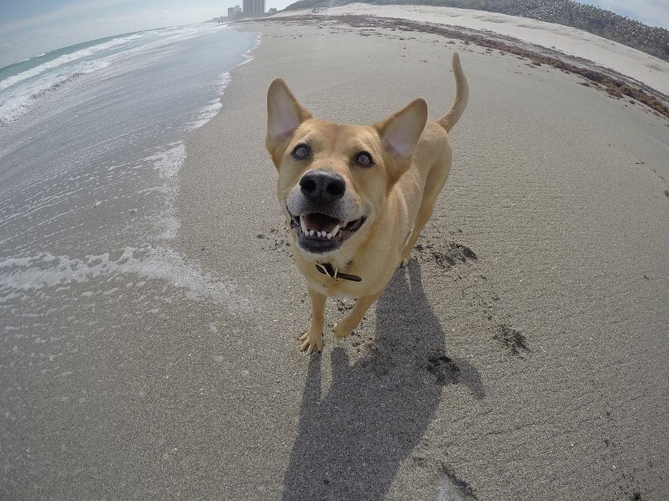Le spiagge per cani sono più diffuse di quanto credi!