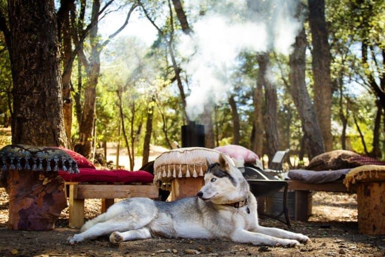 Vacances avec chien: le bonheur!