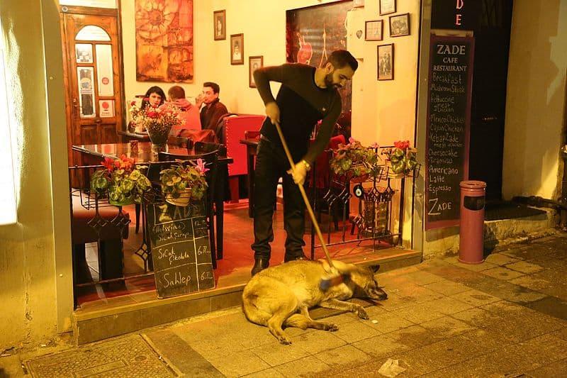Ristoranti amici dei cani! Foto di Jwslubbock