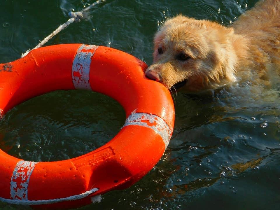 Vacances avec chien: vacances à 4 pattes