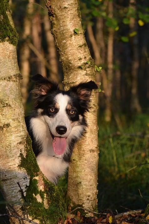 Vacanze dog friendly: idee per la montagna