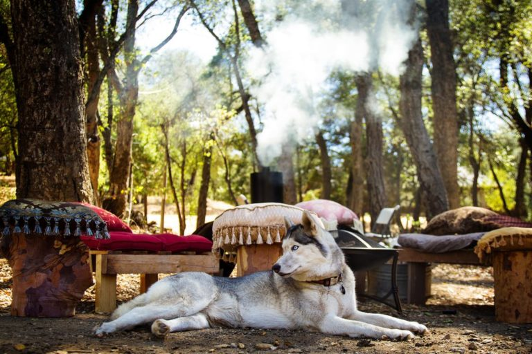 Dog friendly holidays: your dog always with you!
