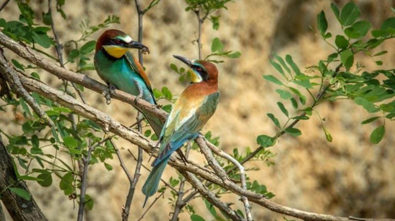 Ile du Lido de Venise: des oiseaux qui vous attendent...