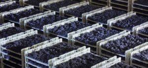 """Veneto – Wein-Tour """"Hemingwine"""" bei der Kellerei Cantina di Stefani!"""
