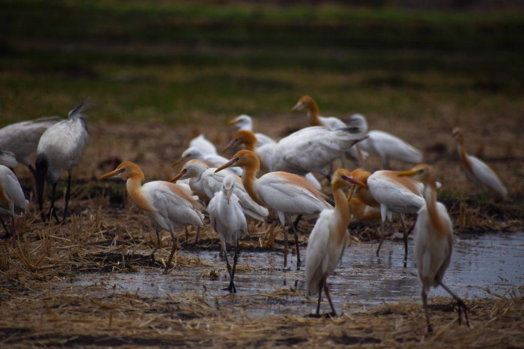 Delta del Po uccelli